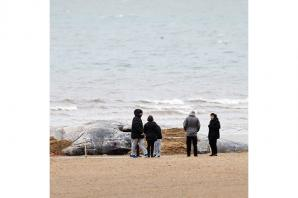 Another whale 'spotted off Norfolk coast'